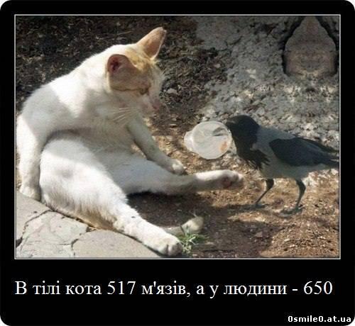 16668052.jpg