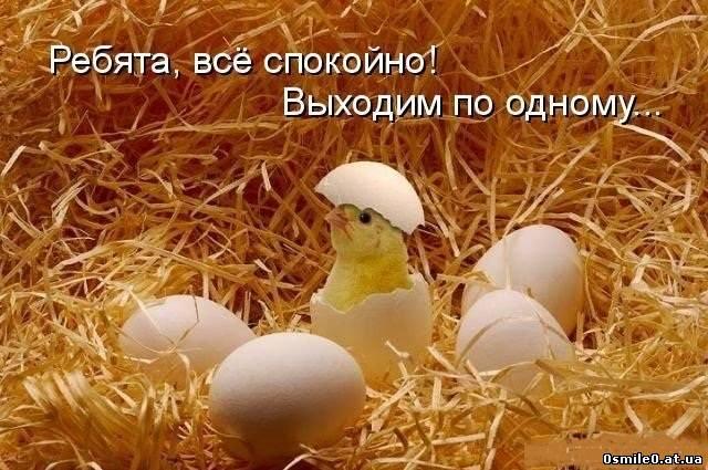 Позитивні фото тварин 20 фото